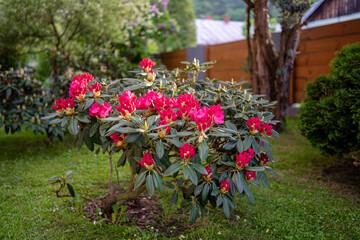 Obraz Kwitnące kwiaty w ogrodzie - fototapety do salonu