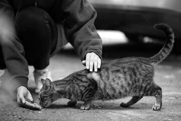 Obraz Woman feeding homeless cat outdoors. Black and white effect - fototapety do salonu
