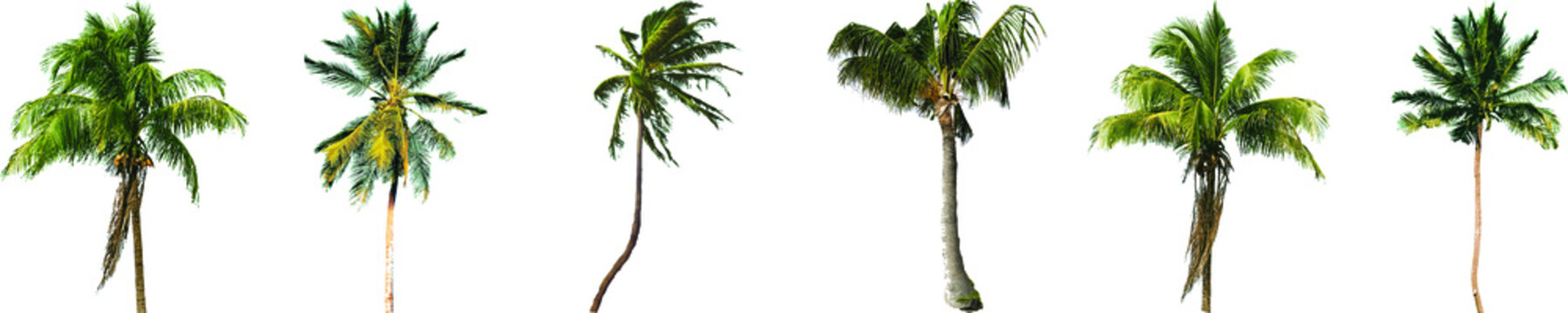 Collection of coconut trees with different types and sizes. Vectorized from high resolution images