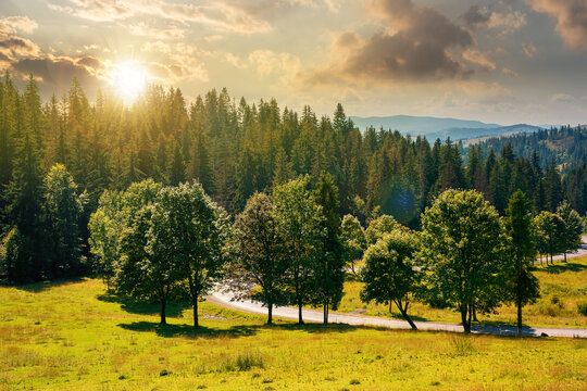 mountainous countryside landscape at sunset. trees on the meadow along the road. coniferous forest on the hills in evening light. bright sunny atfernoon scenery with clouds on the sky in summertime