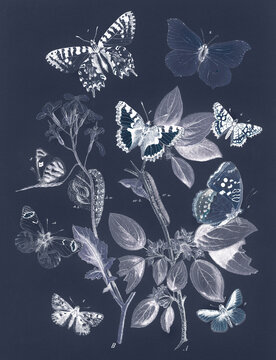 Butterflies and moths vintage design, remix from original painting by William Forsell Kirby