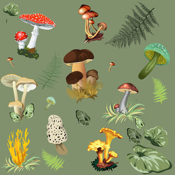 Illustration of forest mushrooms with fern leaves. Mushrooms: fly agarics, chanterelles, porcini mushrooms, honey agarics and others