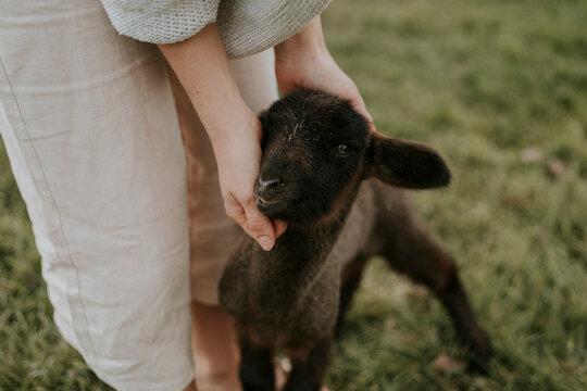 Person petting a lamb