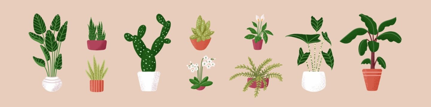 Set of green potted houseplants. Indoor flowers, foliage plants, cactus and succulents in flowerpots and planters for home and office garden decoration. Isolated colored flat vector illustration.