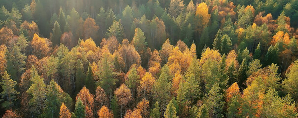 Obraz autumn forest taiga view from drone, yellow trees landscape nature fall - fototapety do salonu