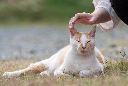 人と猫 茶白猫