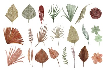 Fototapeta collection of dried floral watercolor illustration obraz