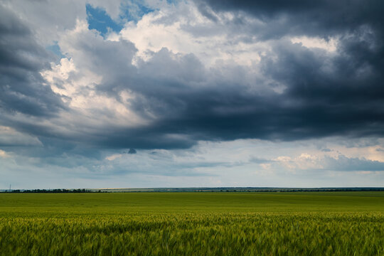 young wheaten green field and dark dramatic sky with rainy clouds, beautiful landscape in the evening
