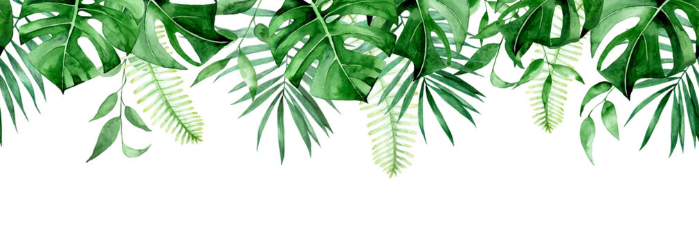 seamless watercolor border, banner, frame with tropical leaves. green leaves of monstera, palm, fern isolated on white background. seamless print clipart