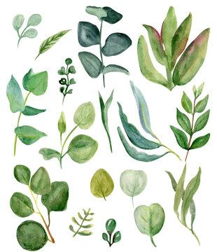 watercolor greenery. Hand drawn set of field herbs, eucalyptus