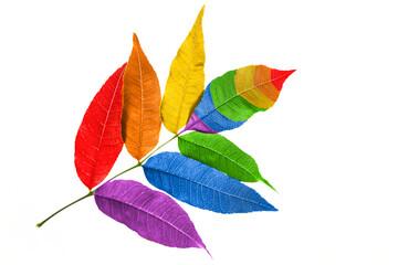Obraz Kolory flagi LGBT są zaczerpnięte z kolorów tęczy. Symbolizują odmienność i równość wszystkich płci i upodobań seksualnych. - fototapety do salonu
