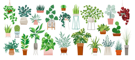 Fototapeta Set of trendy potted plants for home. Different indoor houseplants isolated on white background. Alocasia, begonia, fan palm, monstera, ficus, strelitzia and oxalis. Colored flat vector illustration obraz