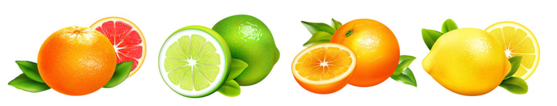 Citrus Fruit orange, grapefruit, lemon, lime