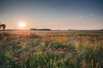 Obraz pola, niebo, krajobraz, lato, rolnictwa, kwiaty, blękit, chmura, przenica, roślin, obszarów wiejskich, mak, kwiat, farma, kraina, kraj, pora roku, kukurydza, wieś, watrak, energia wiatrowa, ekologia - fototapety do salonu