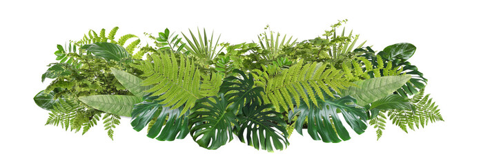 Fototapeta Beautiful composition with fern and other tropical leaves on white background. Banner design obraz