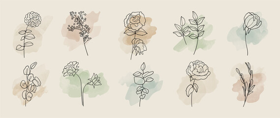 Minimal botanical hand drawing design for logo and wedding invitation. Floral line art.  Flower and leaves on watercolour background design collection for bouquets decoration, invite, packaging design