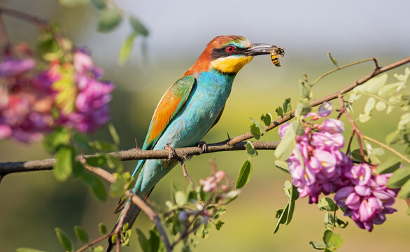 bee-eater on a branch with a wasp in its beak