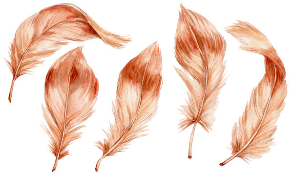 Set of brown feathers; watercolor hand drawn illustration; with white isolated background