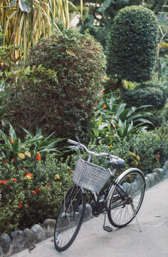 Cycling or commuting in city urban environment, ecological transportation concept. bicycle with a basket near bushes