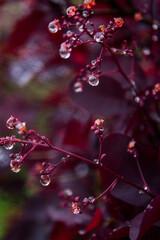 Obraz Krople na fioletowym tle - fototapety do salonu