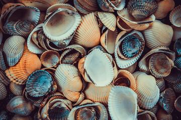 Fototapeta variety of sea shells from beach obraz
