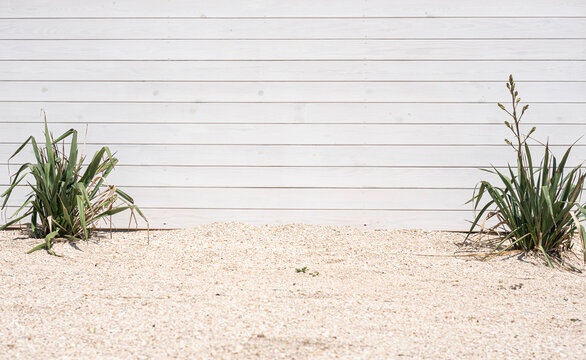 Beautiful beach mockup for your advertise. Empty white wooden wall, sand and beach plants behind the sea. Background with copy space.