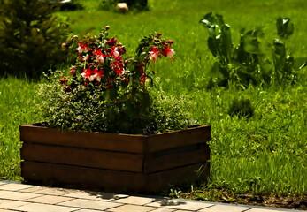 Obraz Kwiaty w skrzynce na owoce - fototapety do salonu