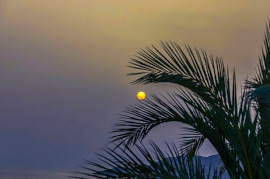Yellow Sun. Copy Space. Round yellow sun behind  palm leaves. Focus in the background. Stock Image.