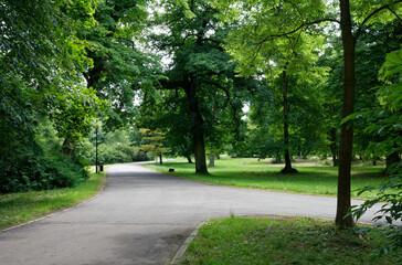 Obraz Drzewa w parku Świerklaniec, woj. Ślaskie - fototapety do salonu