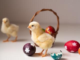 Fototapeta Kurczaczki wielkanocne, jaka i koszyczek  obraz
