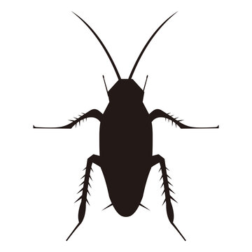 cockroach icon vector illustration sign