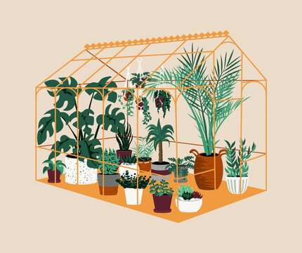 Greenhouse. Botanical house with exotic and home cultivated plants. Modern garden with decorative potted trees. Tropical palms grow in hothouse. Vector cartoon orangery illustration