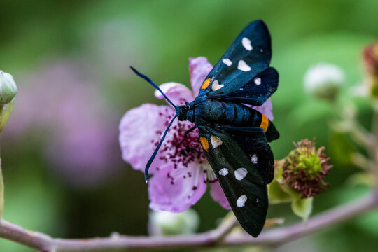 Insekten der Kvarner Bucht