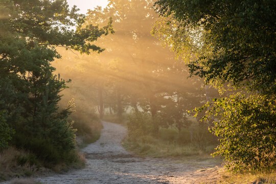 morning sunbeams over path in forest