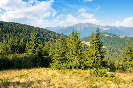 idyllic mountain scenery in morning light. evergreen trees on the steep hills. wonderful summer landscape of carpathians with gorgeous cloudscape on the blue sky
