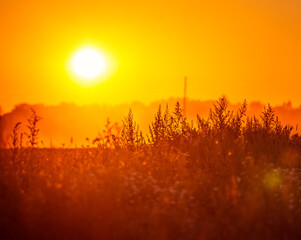 A sun disc shining through the mist during the summer sunrise. Summertime scenery of Northern Europe.