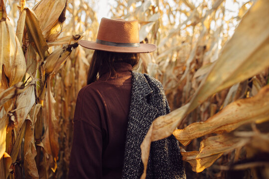 Beautiful stylish woman in brown hat and vintage coat walking in autumn maize field in warm sunny light. Back view. Fashionable young hipster female walking in fall corn in evening countryside