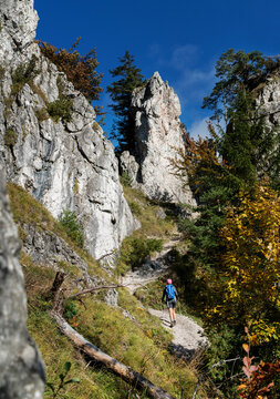 Young hiker backpacker woman on the hiking path having a mountain walk using trekking poles enjoying autumn nature with huge picturesque clifs, Slovakia. Active people in nature concept image.