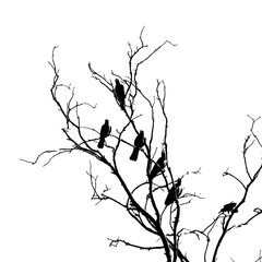 Raven bird on a branch in contrast
