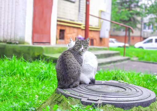 Two cats sitting on sewer hatch near house