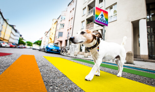 dog and owner  with leash crossing rainbow gay pride street