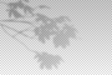 Obraz Shadow of leaf from window. Shadow palm leaves isolated on transparent background. Sunshine for effect overlay. Plant shade. Tropic tree. Tropic natural foliage for summer mockup. Vector illustration - fototapety do salonu