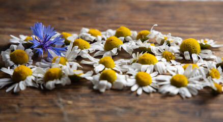 Obraz Kwiaty polne na tle desek niebieskie i białe - fototapety do salonu