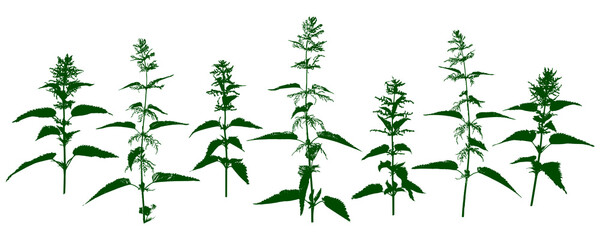 Obraz Nettle - stinging grass - wild herbs - herbal silhouettes isolated on white - fototapety do salonu