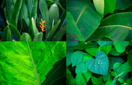 Pictures of different types of leaves on a green background.