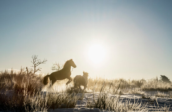 Horse rearing up in sunny winter field