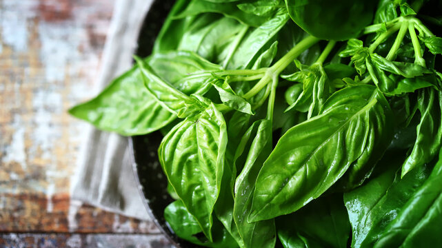 Selective focus. Fresh juicy basil on a plate.