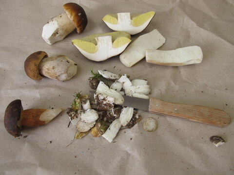 Clean and prepare mushrooms with a knife, porcini and bay bolete