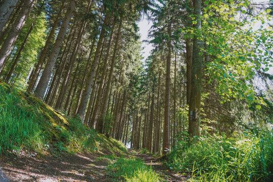 Weekend getaway in hochsauerlandkreis forest walk paths