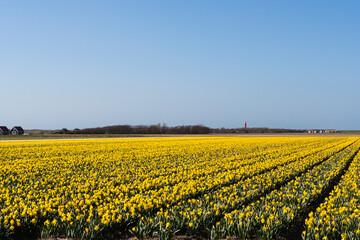 Landscape at Texel